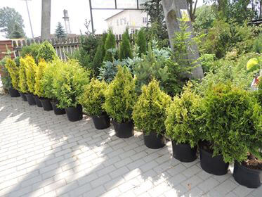 Azalia - Centrum Ogrodnicze